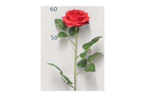 Rose Dijon rouge