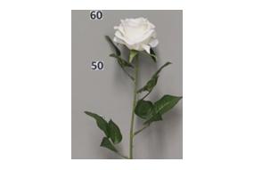 Rose Dijon blanc