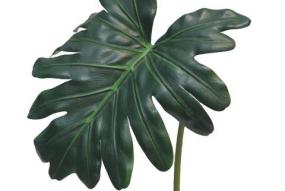 Feuille de Philodendron vert58cm