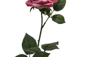 Rose Dijon rose foncé