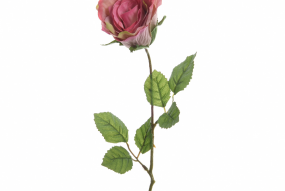 Rose Fuchsia sur tige 45cm