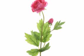 Renoncule Rose Foncé 45cm