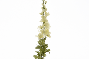 Delphinium Blanc 90cm